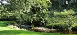 meadow stream1
