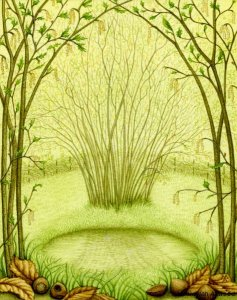 Image copyright Meraylah Allwood, from her 'Wisdom of Trees' Oracle Deck